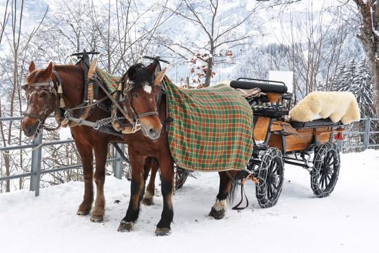 Winterurlaub - Flachau - Ferienhaus - Mitterer - Schneeschuh wandern - Pferdeschlitten